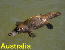 Click and go to our Australia images